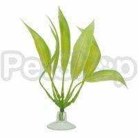 Растение Hagen Marina Amazon (Амазон)