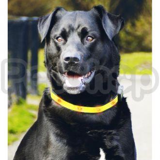 Pet Pro ОШЕЙНИК с огоньками для собак, нейлон, желтый