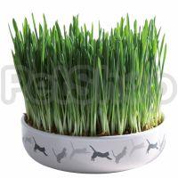 Пророщеная трава