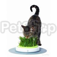 Hagen Catit Grass Garden ( хаген живая зеленая лужайка для кошек)