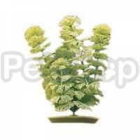 Растение Hagen Marina Ambulia