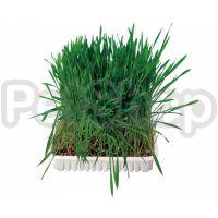 Trixie Small Animal Grass ( Трава для грызунов в чаше)
