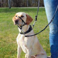 Trixie Top Trainer ( Дрессировочный намордник-петля  (недоуздок, халти) позволяет корректировать поведение собаки)